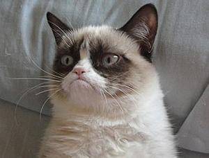 Сердитая кошка заработала за два года 100 миллионов долларов