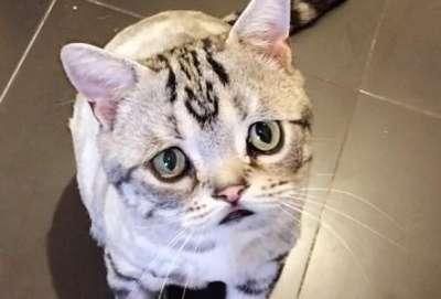 Очень грустная кошка Луху