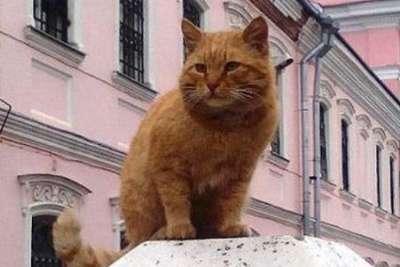 Пять котов, которые устроены на работу в России