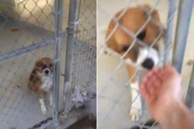 Актер Крис Эванс показал видео с первой встречей со своей собакой, взятой из приюта